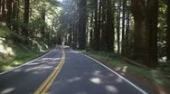 Stock Video Footage of Driving through redwood forest