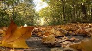 Stock Video Footage of Dried and fresh fallen leaves on trail in autumn