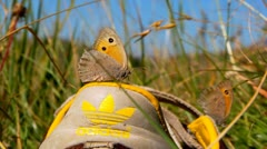 Butterfly resting on the shoe - stock footage