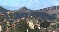 Stock Video Footage of Cacti3