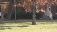 Stock Footage College Students in Fall - Wide, leaves blowing in tree - stock footage