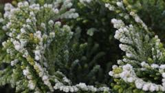 Season - white frost Stock Footage