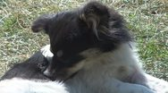Beautiful dog Stock Footage