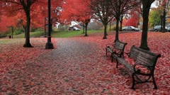 Public Waterfront Park in Portland Oregon Colorful Fall Season Stock Footage