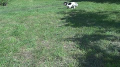 Beautiful dog cat run green grass rural pasture park meadow sunny day pet animal Stock Footage