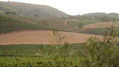 Sonoma - morning vineyard - 1080p HD Stock Footage