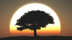 tree at sunset - stock footage
