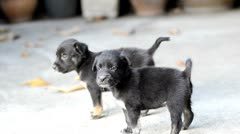 Two Cute Puppies Stock Footage