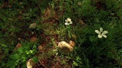 White flowers on a forest floor in Israel. Stock Footage