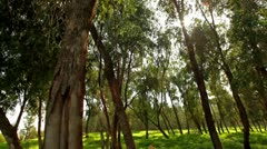 A sunlit forest in Israel. Stock Footage