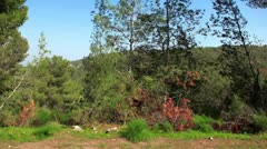 Drive-by of a Mount Tabor forest in Israel. Stock Footage