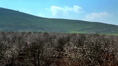 A blooming almond orchard in Israel. Stock Footage