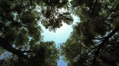 A forest canopy in Israel. Stock Footage