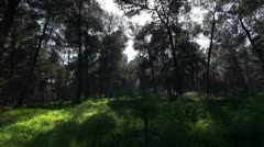 A bright and shadowy forest in Israel. Stock Footage