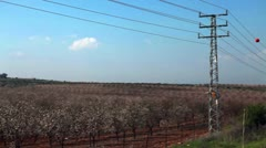Power lines next to an almond orchard in Israel. Stock Footage