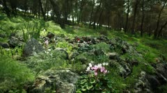 A rocky forest floor with flowers in Israel. Stock Footage