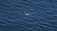 Seagull at sea 2 Stock Footage