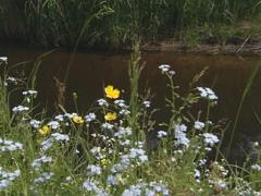 Stream flow. Coast grew up lush meadow with wild flowers. Stock Footage
