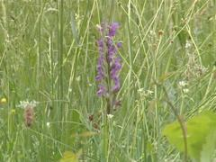 Meadow full of growing wild flowers. Yellow and blue blooms. Stock Footage