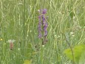 Stock Video Footage of Meadow full of growing wild flowers. Yellow and blue blooms.