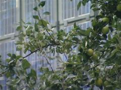 Apple tree branches, solar collectors. Green energy production. Stock Footage