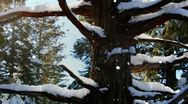 Stock Video Footage of Snowy Tree JC81