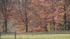Stock Footage College Students in Fall - several walking, great color Stock Footage