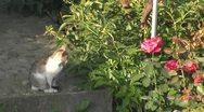 Beautiful cat Stock Footage