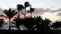 Sunset, sunrise palm trees Stock Footage