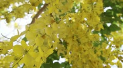 Wonderful Yellow Flowers on a tree Stock Footage