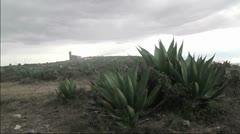 Cactus  Stock Footage