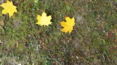 Autumn Leaves Fall On Ground Stock Footage
