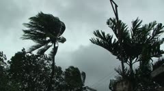 Palm Tree Blows In Wind As Hurricane Approaches Stock Footage