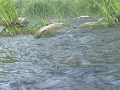 Closeup of strong water flow between rocks. Stream fragment. Stock Footage