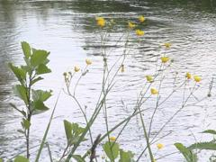 Wild meadow flowers and flowing river. Natural view. Stock Footage