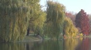 Stock Video Footage of Beautiful willow autumn lake nature mountain colorful scene summer nature