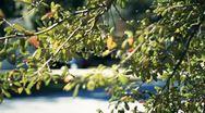 Tree In Wind Stock Footage