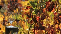 Vineyard Wine Pour Stock Footage