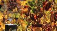 Stock Video Footage of Vineyard Wine Pour