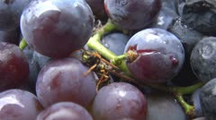 Insects on grapes Stock Footage