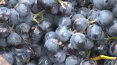 Making wine in old style grapes red farm delicious macro eco manual grapevine  Stock Footage