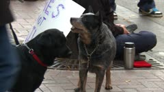 Protest, Occupy (Wall-Street) Calgary, dogs - stock footage