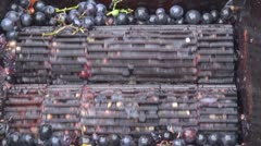 Making wine in old style grapes machine farm production natural pressed winery  Stock Footage