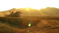 Harvesting wheat cut 5 Stock Footage