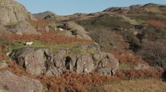 Welsh hillside Stock Footage