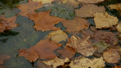 Leaves on the lake,slightly shaking. Stock Footage
