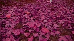 Falling purple leaves full on ground. Stock Footage