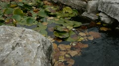 Stock Video Footage of Lotus leaf in pond,rockery stone and shaking water.
