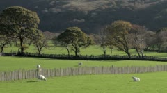 Welsh countryside Stock Footage