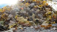 Stock Video Footage of Pile of Leaves HD